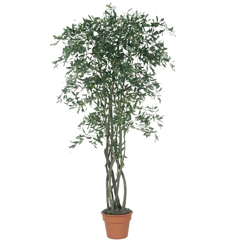 Olive Tree 7' - Artificial Trees & Floor Plants - Artificial Olive trees for rent