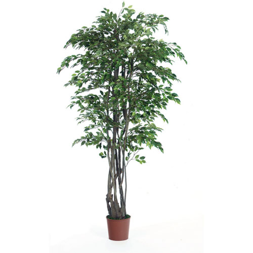 Ficus Tree 7' - Artificial Trees - artificial ficus trees for rent or own