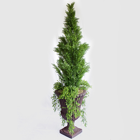 Potted Arborvitae with Greens 6' 8