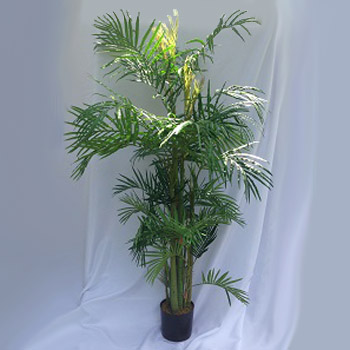 Areca Palm 7' - Themed Rentals - Hawaiian decoration Minneapolis rentals