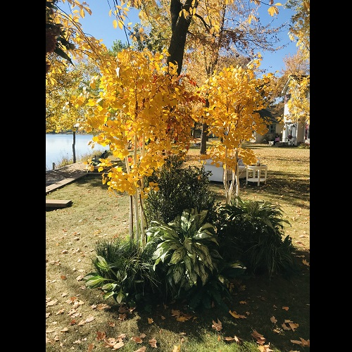 Outdoor Rent-A-Woods - Artificial Trees & Floor Plants - Fall Colors tree rentals for weddings