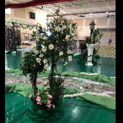 Daisy Tree Rental - Idea Gallery - daisy topiary tree faux