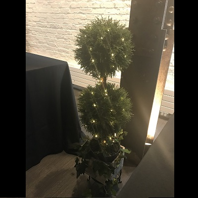 Cypress Pine Dbl Topiary 3' - Artificial Trees - gorgeous double topiary for rent