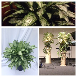 Artificial Floor Plant Rentals - Idea Gallery - wonderful floor plants for weddings