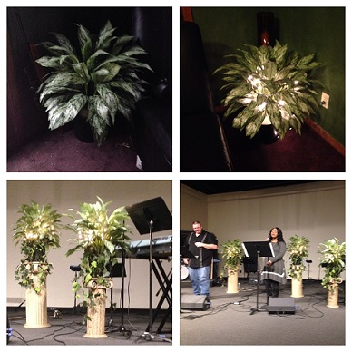 Green Floor Plant - Artificial floral - Theater Rentals