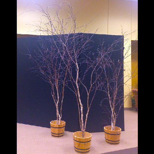 Winter Birch Trio - Artificial Trees - Starry Country Night Prom Decoration idea