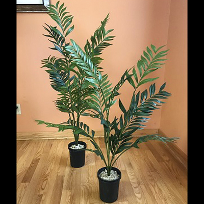 Parlour Palm Pair 3' & 4' - Themed Rentals - Prom tropical tree rental
