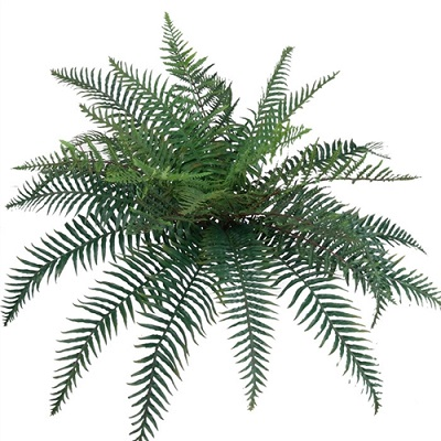 Mixed River Fern 38