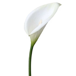Calla Lily - White - Artificial floral - Artificial calla Lily for rent