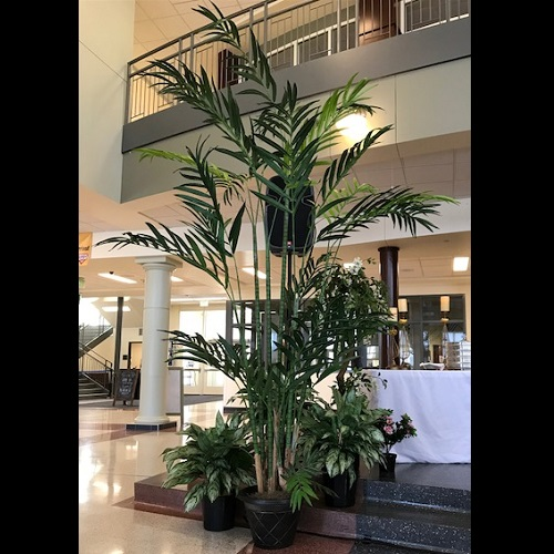 12' Kentia Palm - Themed Rentals - Tall artificial Palm Trees for rent