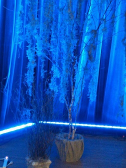 Spooky Winter Birch Rental 9' - Artificial Trees - Spooky Halloween tree rentals