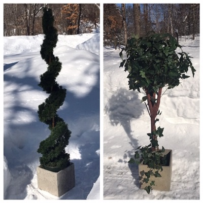 Topiary Tree Rentals - Idea Gallery - topiary rentals Elk River Minnesota
