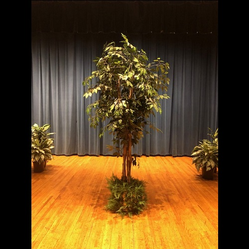 One-of-a-Kind Ficus Tree 7' - Artificial Trees & Floor Plants - artificial ficus trees for rent or own