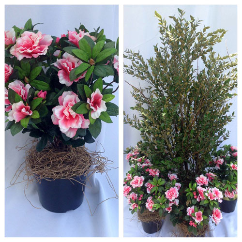 Potted Azalea Bush - Artificial floral - Wedding Greenery for outside weddings