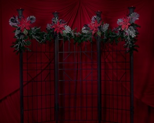 Backdrop - Christmas Photos - Idea Gallery